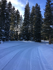 Ward Trail Groomed XCSki Resized